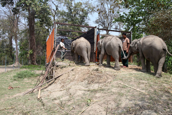 Spotlight India: Four elephants settle into their new home in Manas