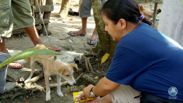 After a 7.1 earthquake struck the Bohol province of the Philippines in 2013, IFAW's partner the Philippines Animal Welfare Society (PAWS) responded to animals following the disaster.