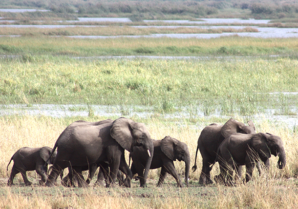 Elephants need space for their survival but their habitats are becoming increasingly fragmented.