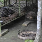 caged-civets-1