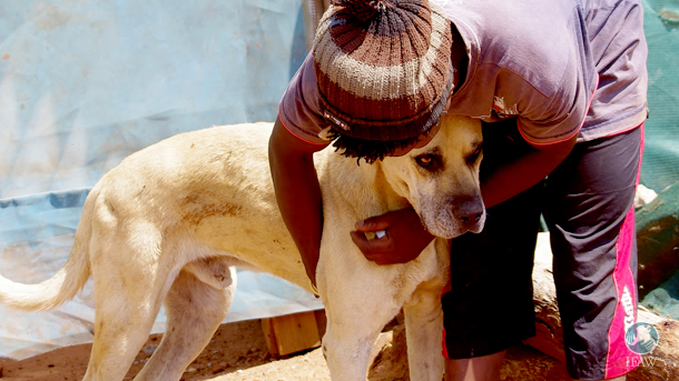 A young man named Moses, also known as the 'Dog Boy,' is CLAW's contact at the Randfontein Municipal dump.