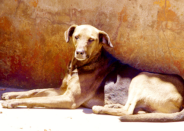Even the toughest of dogs will suffer without shelter
