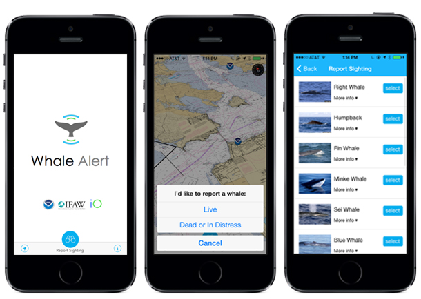 The Whale Alert app. Is available for both for iPhone and Android platforms.