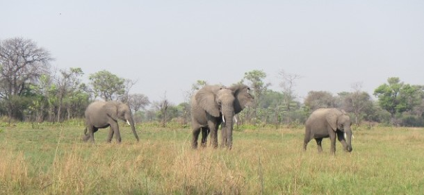 Chodoba, Batoka and Kafue in the wild October.