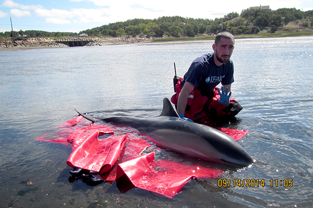 Back in September, an IFAW responder Nathan DiMartino cares for one of the dolphins.
