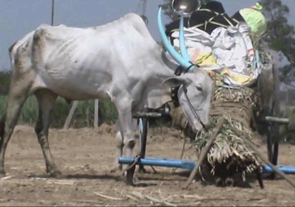Animal Rahat Chinchali Fair
