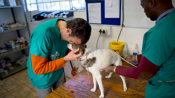 The author with one of the clinic's dogs in his care. PHOTO: ©Nick Bothma/EPA