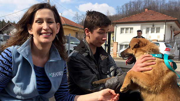 Dogs and people living in harmony in Bosnia