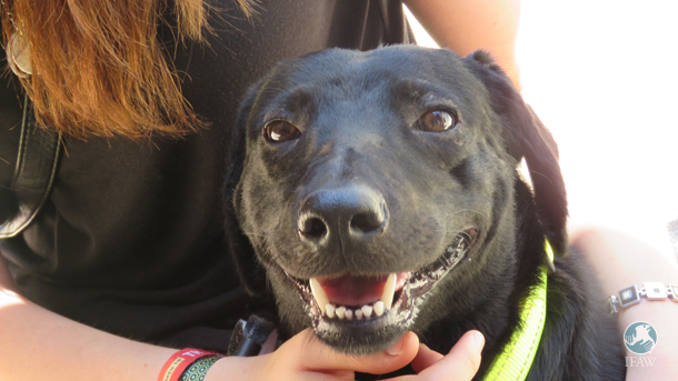 Beautiful Belle enjoys some attention at CLAW's Meet the Heroes event.