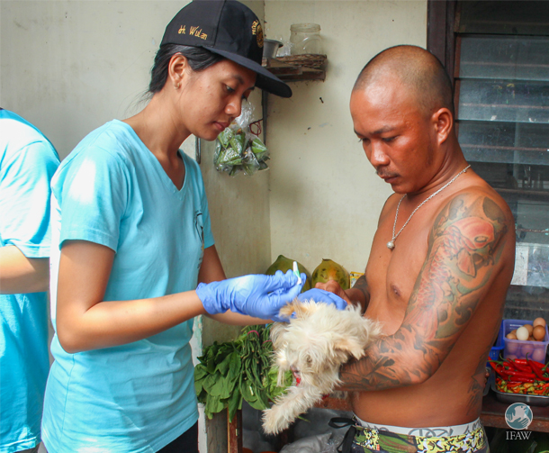 A veterinary staff member of Udayana University gives treatment to Balinese dog.