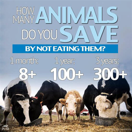 PETA US - How Many Animals Have You Saved
