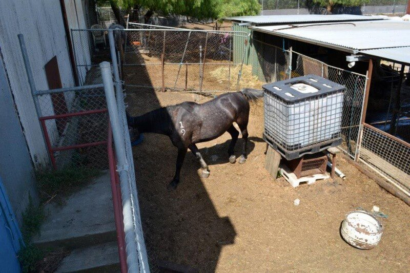 Melbourne Horse Kept in Unsuitable Yard