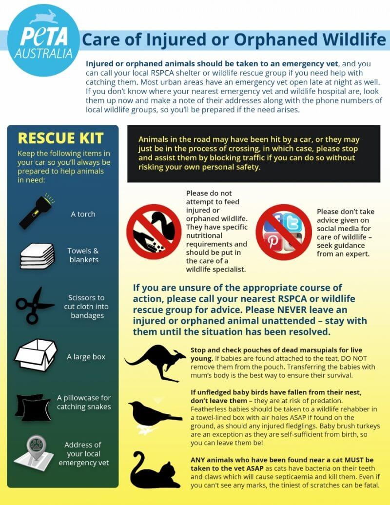 PETA Australia Infographic Injured Wildlife Advice Small