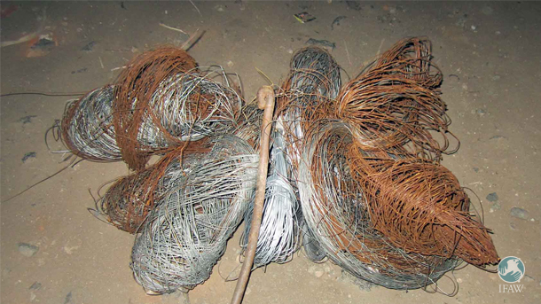 The preferred method of bush meat poaching is the use of wire snares, which are completely indiscriminate in their slaughter and cruelty.