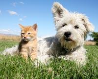 Oppose Bill Promoting Animal Cruelty