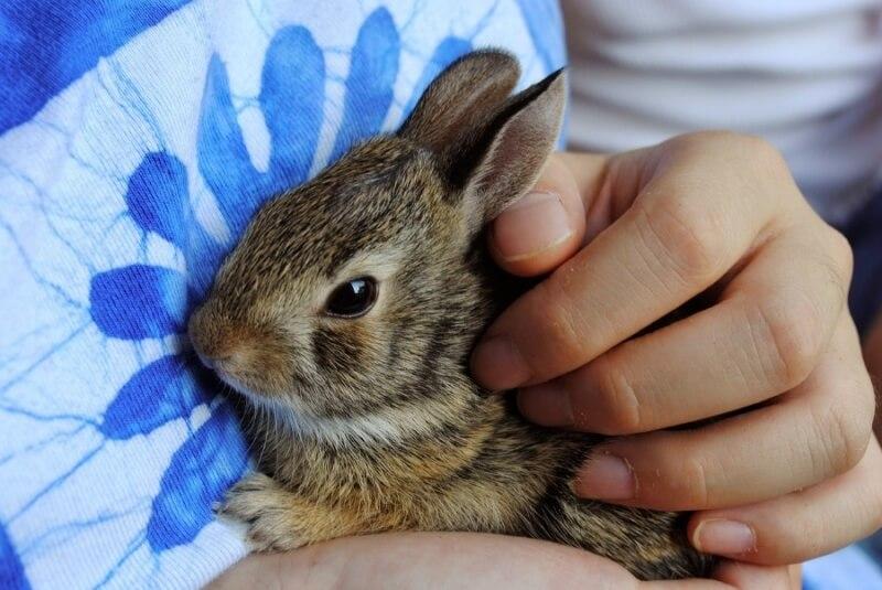 Cute bunny being held