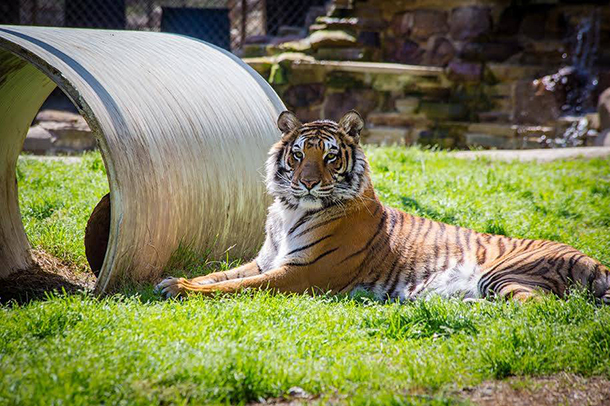 Sheba lived for 10 years in an inadequate cage.