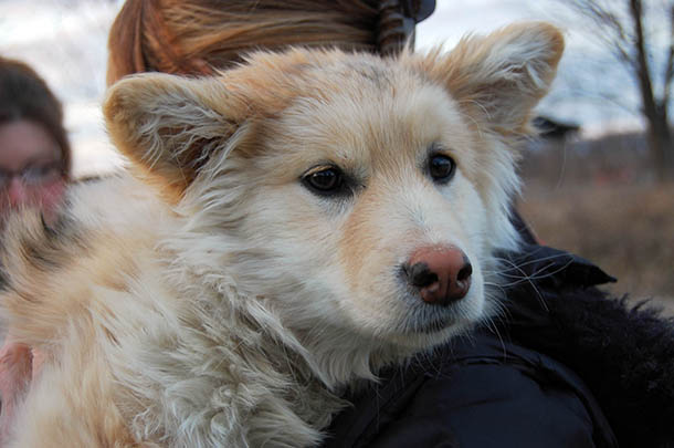 The intent of the Northern Dogs Project is to keep dogs in the communities by helping their people to provide for them