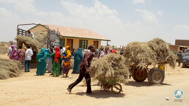 IFAW and other groups distributed hay and wheat bran to local beneficiaries.