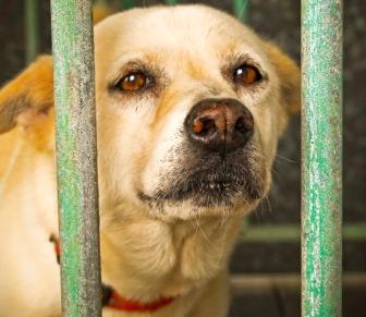 Dog Caged