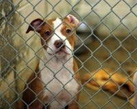 Protect California's Homeless Animals
