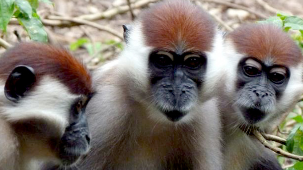 CERCOPAN has provided safe haven and rehabilitation for monkeys.
