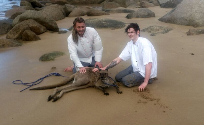 Chefs save kangaroo port elliot