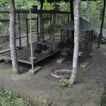 caged-civets-2