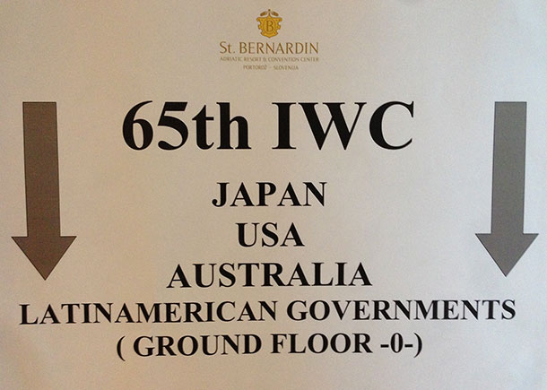 All going down? IFAW's bottom line at IWC65 is conservation over whale killing. c. IFAW/Patrick Ramage.ac