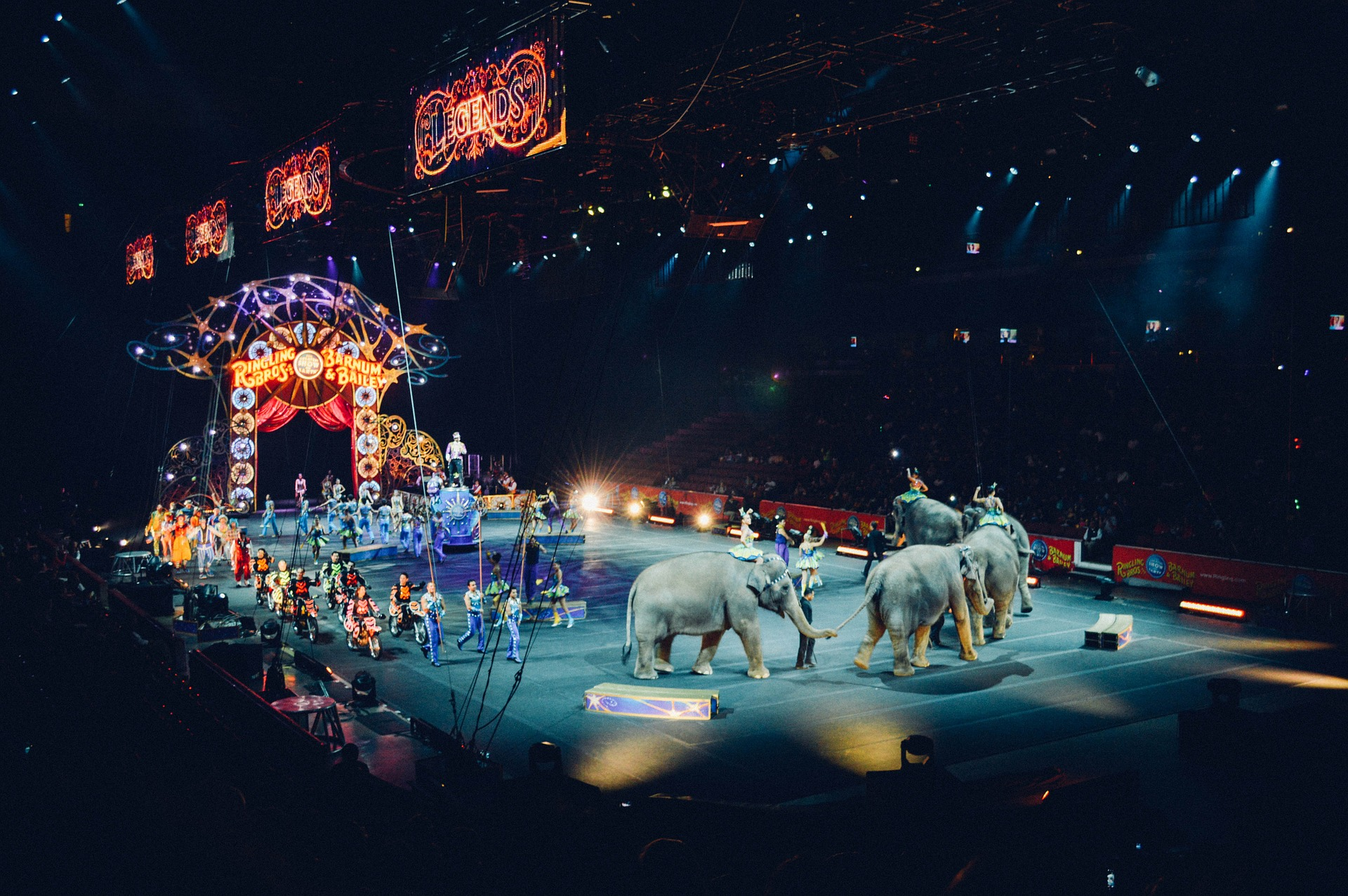 Elephants at the circus.