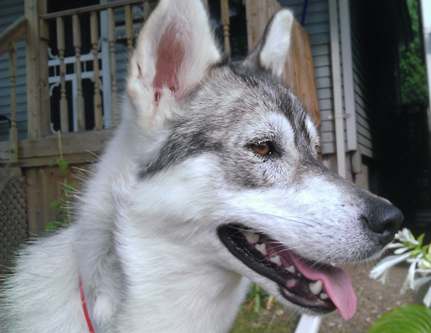 Meet Phillie: Thanks to IFAW's Northern Dogs Project, this abandoned dog now enjoys a happy home and a loving owner.