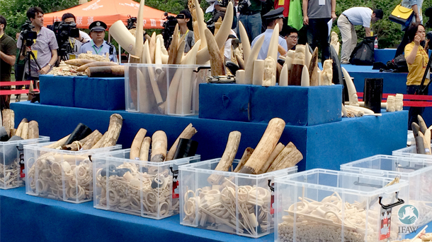 China's two ivory crushes foreshadowed the government's commitment to end ivory trade.