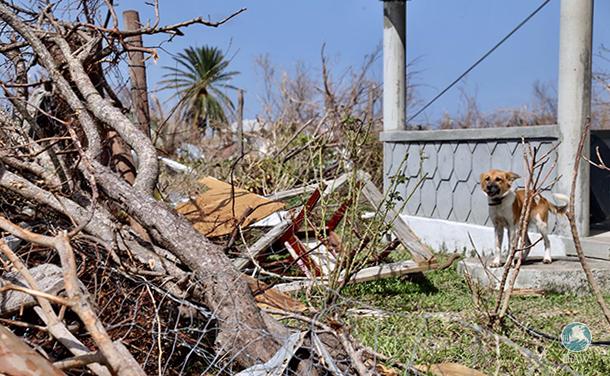 Barbuda Environment officer Alexander Desuza dog after hurricane irma