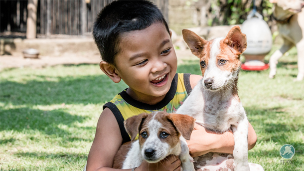 Pak Dek Lung's son holds two puppies that were found abandoned in the seaside town of Sanur and rescued by Program Dharma.