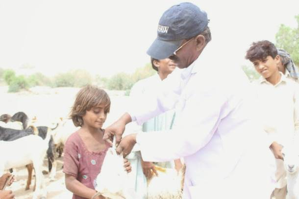 A young villager helps hold the family sheep receiving treatment for drought-related illness.