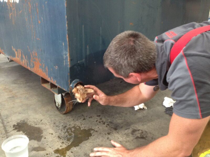 Kitten Rescued From Dumpster