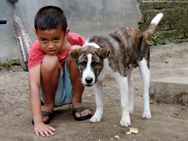 Instead of vaccinating dogs against rabies, many governments are killing them.