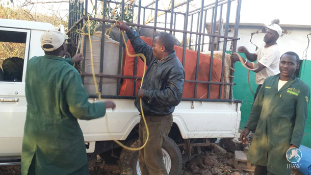 transporting orphan elephant to zambia orphanage
