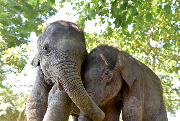 Baby elephants at the IFAW/WTI Wildlife Rehabilitation Centre