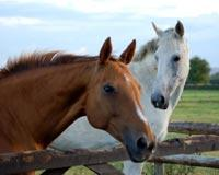 Keep Horse Slaughter Plants Out of Tennessee