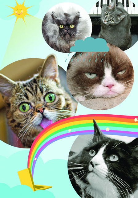Internet Cat Sensations: Meet five felines who show us why cats rule the Internet