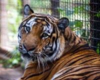 Help protect big cats