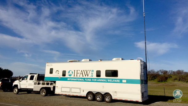 Using the specialized mobile command trailer provided by IFAW, NVADG volunteers fielded more than 450 requests for services from the public in 24 hours.
