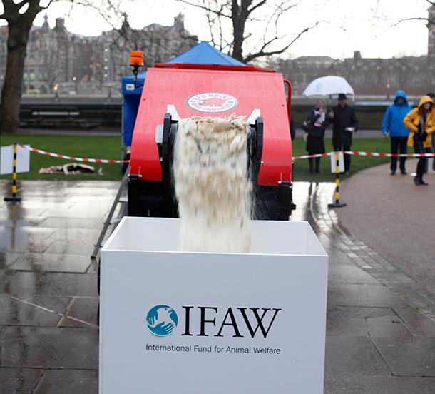 c. IFAW/David Parry/PA.