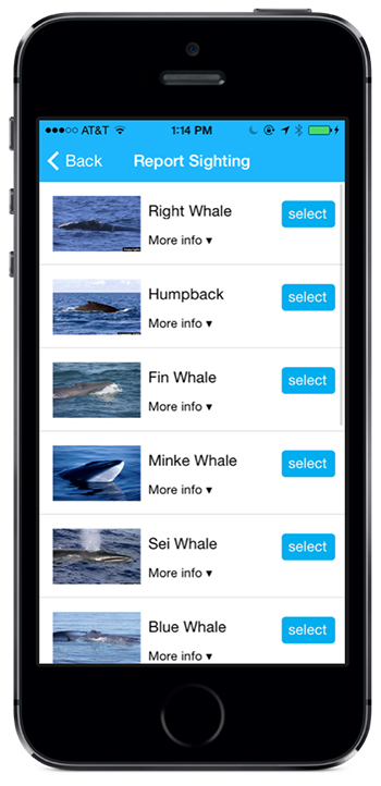 A screenshot of the Whale Alert App.