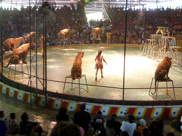 Who cares for Mexico's retired circus animals?