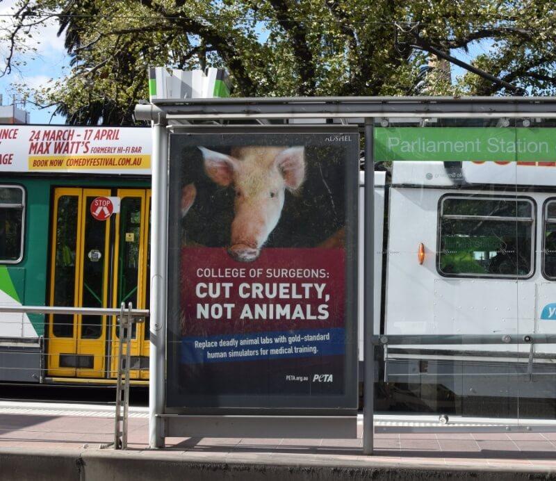 PETA RACS Tram Ad Melbourne