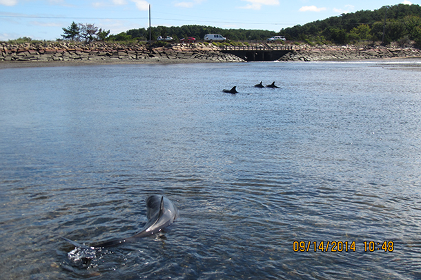 Four of the five dolphins are visible in this photo.