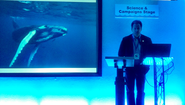 WHALEFEST 2015: a leviathan happening