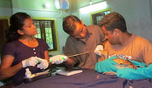 Veterinarian Dr. Panjit Basumatary and his team conduct a preliminary examination.